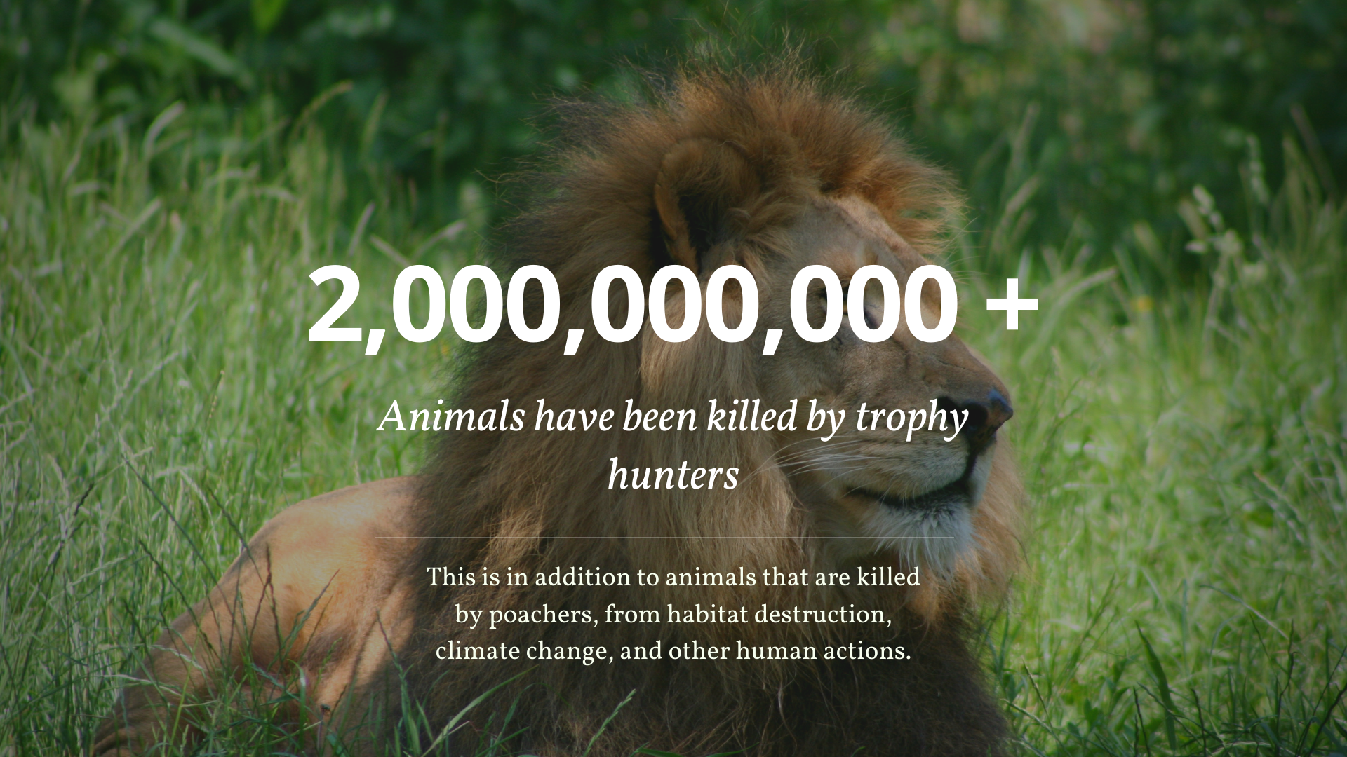 trophy-hunting-10