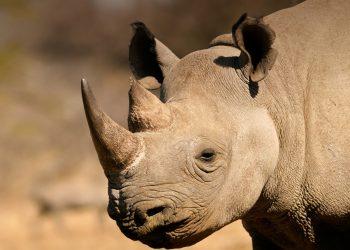 animals_hero_black_rhino_0.jpg